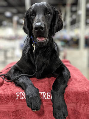 Fishercreek Flat Coated Retrievers